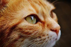 日本も猫は人気