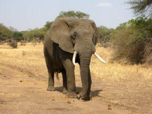 「ゾウ」とは言わずに「ゾー」と言いましょう