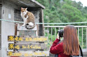 台湾でもネコは人気らしい