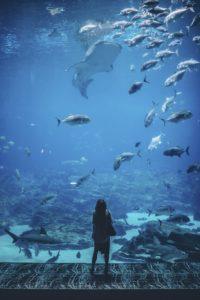 水族館は飼育員の皆さんのおかげです