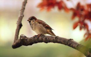 野鳥ってどの鳥?