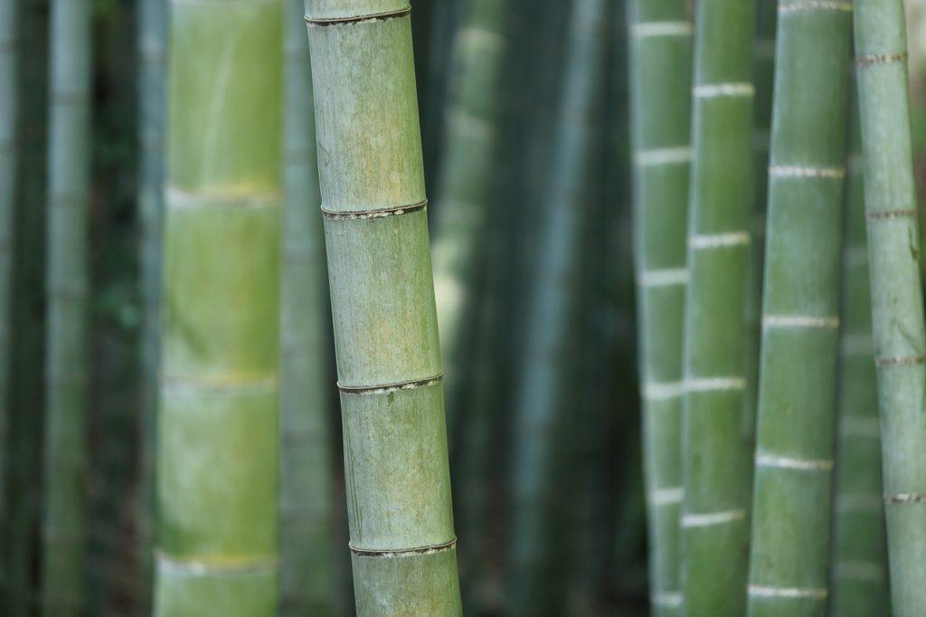 竹のような丈夫さ